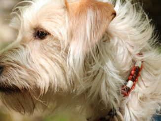 Best Dog Flea Collars in 2020