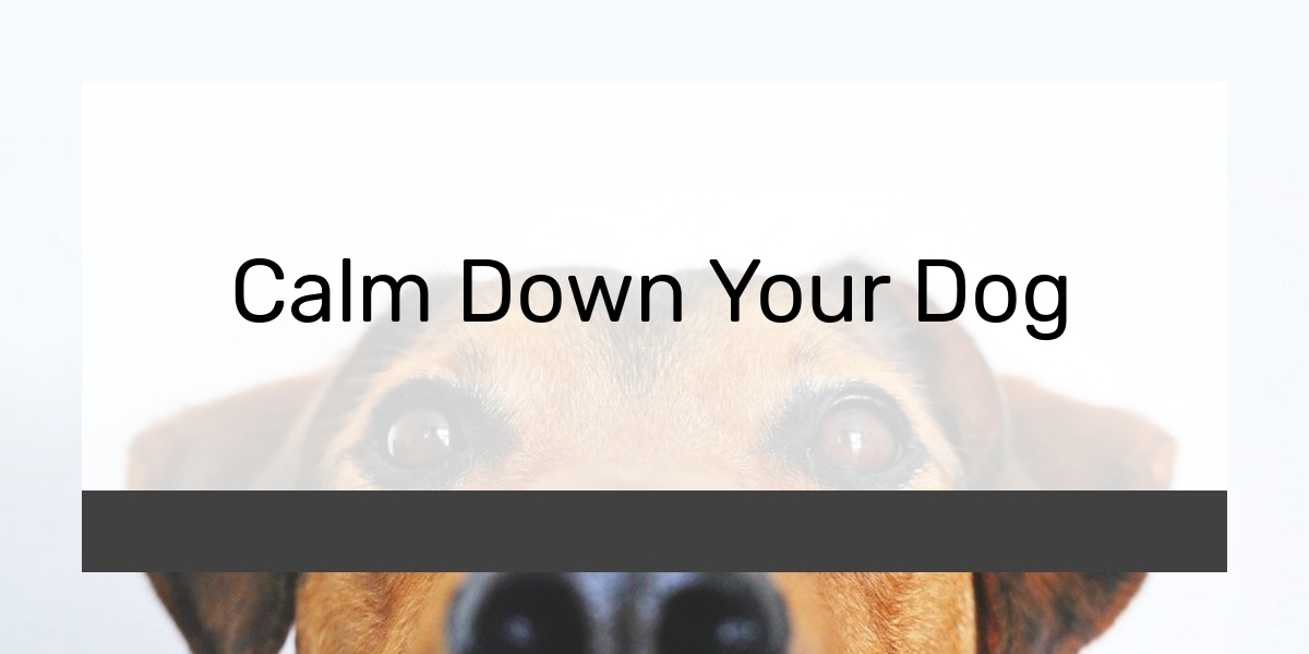 Calm Down Your Dog