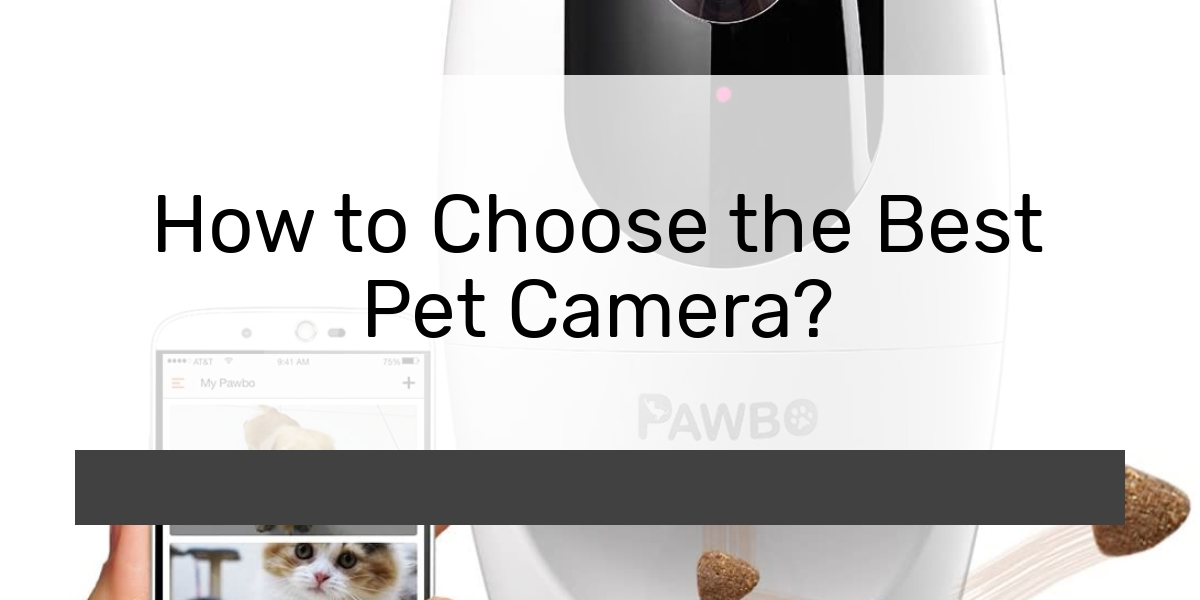 How to Choose the Best Pet Camera?