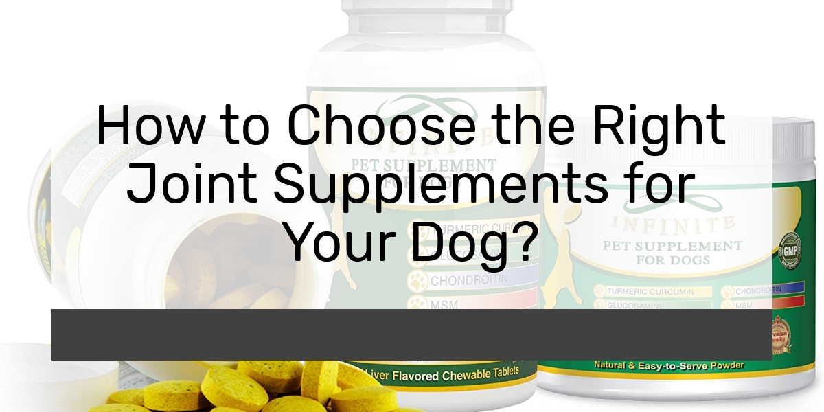 How to Choose the Right Joint Supplements for Your Dog?