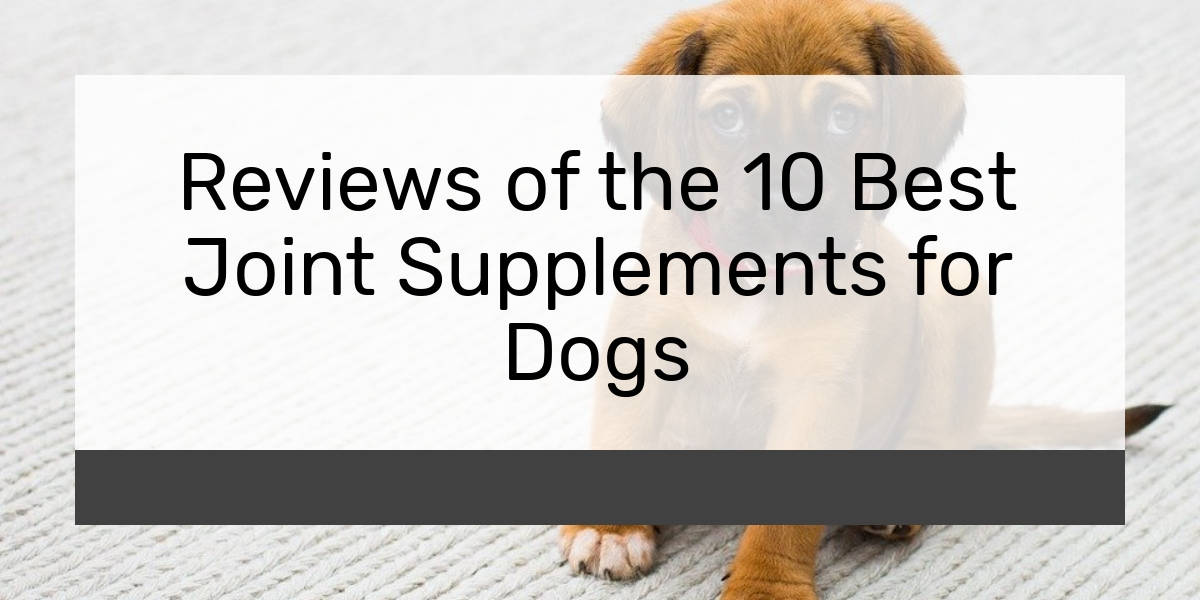 Reviews of the 10 Best Joint Supplements for Dogs