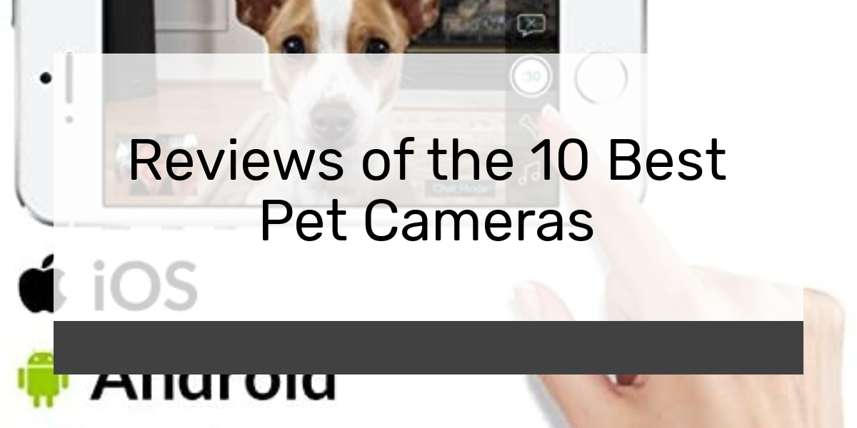 Reviews of the 10 Best Pet Cameras