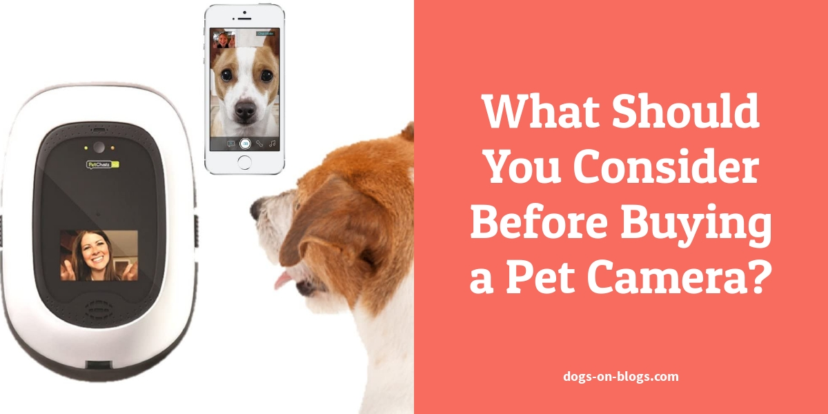 What Should You Consider Before Buying a Pet Camera?