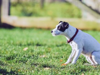 The Seresto Flea and Tick Collar: What Is It and What's Its Purpose