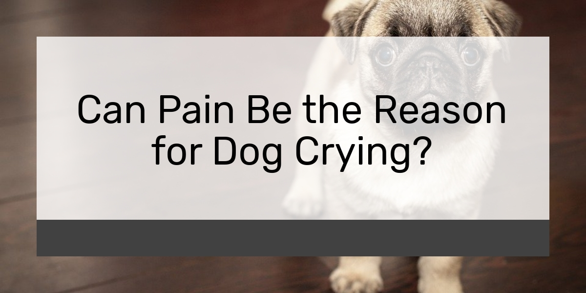 Can Pain Be the Reason for Dog Crying?