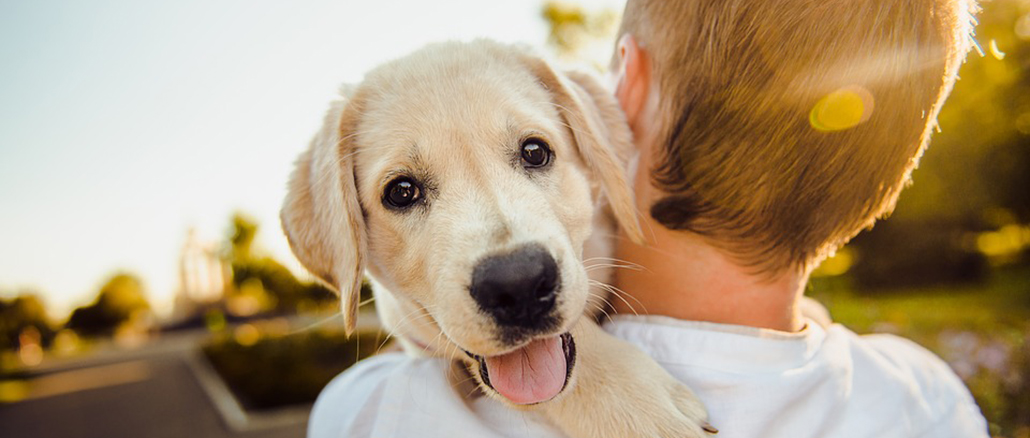 How to Keep Your Dog Healthy and Safe 10 Ways to Do It