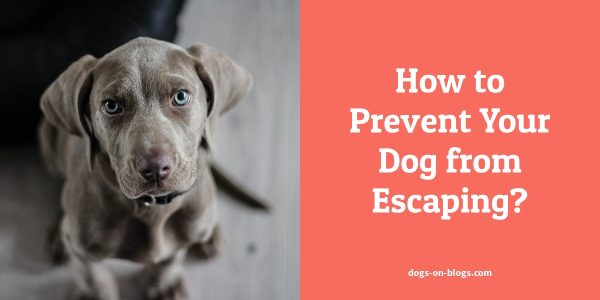How to Prevent Your Dog from Escaping?