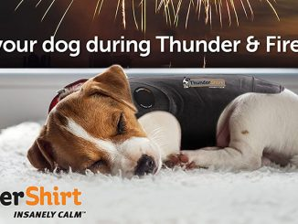 Thundershirt 2020 Review - Is It a Solution for Dog Anxiety