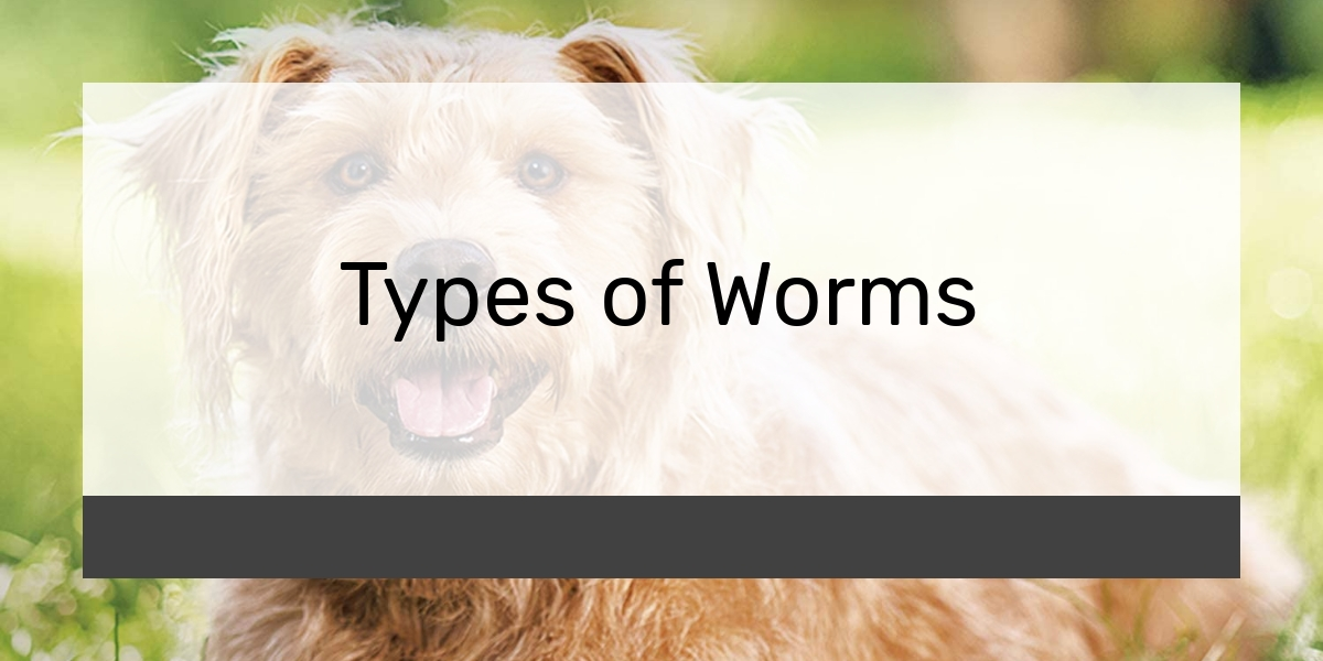 Types of Worms