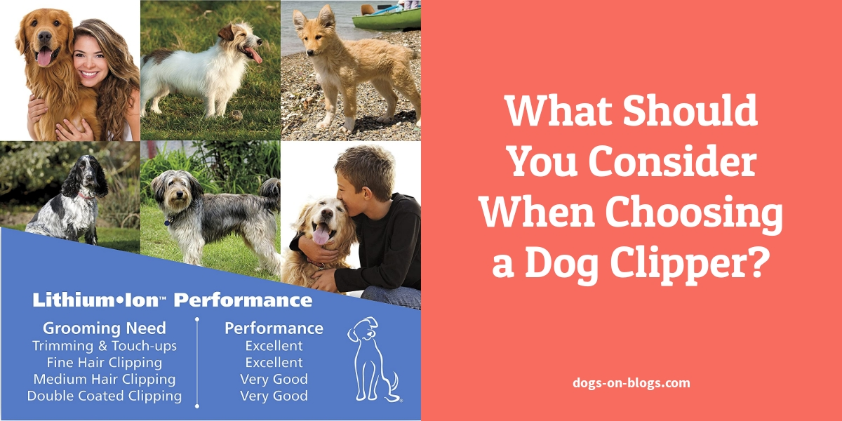 What Should You Consider When Choosing a Dog Clipper?