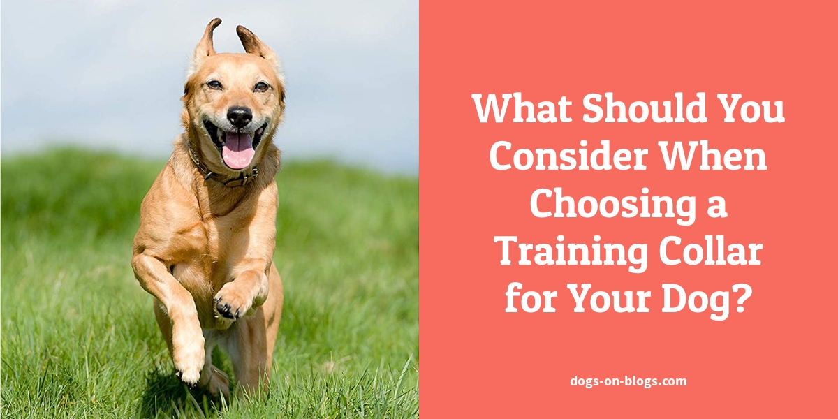 What Should You Consider When Choosing a Training Collar for Your Dog?