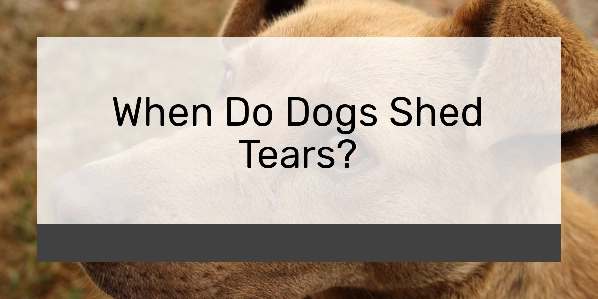 When Do Dogs Shed Tears?