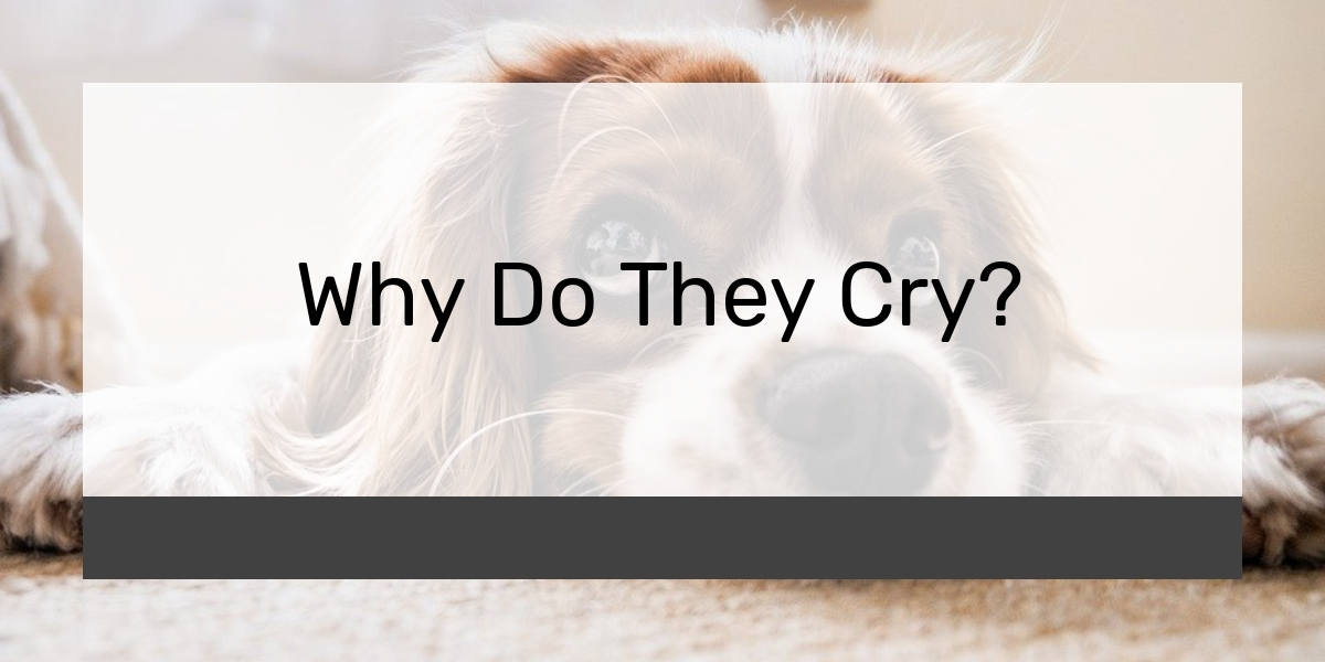 Why Do They Cry?
