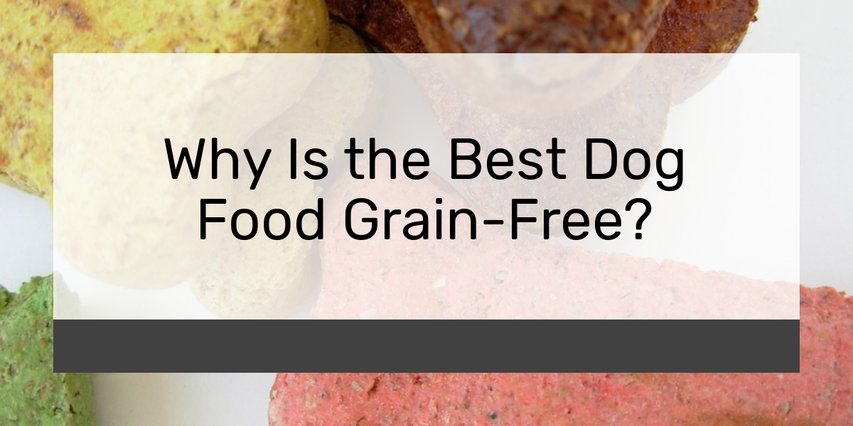 Why Is the Best Dog Food Grain-Free?